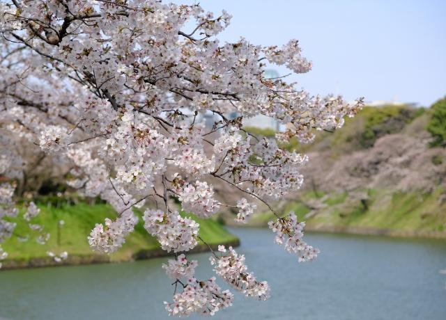 ☆期間限定☆都心の桜名所サイクリング!~ただの花見じゃ物足りないあなたへ~【東京サイクルトリップ】